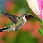 Google's New Algorithm – Hummingbird!